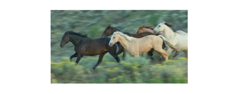 de-gangen-van-het-paard-734-w800