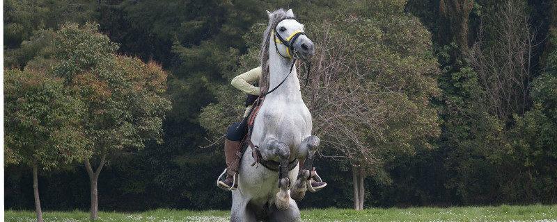 gedragsproblemen-door-natuurlijke-scheefheid-paard