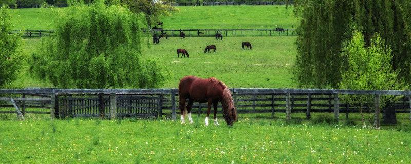 natuurlijke-behoeftes-van-het-paard-145-w800