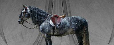 rijkunstige problemen paard