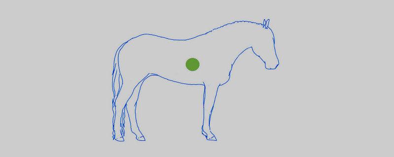 zwaartepunt-paardjpg